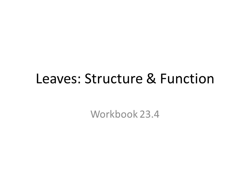 Leaves: Structure & Function