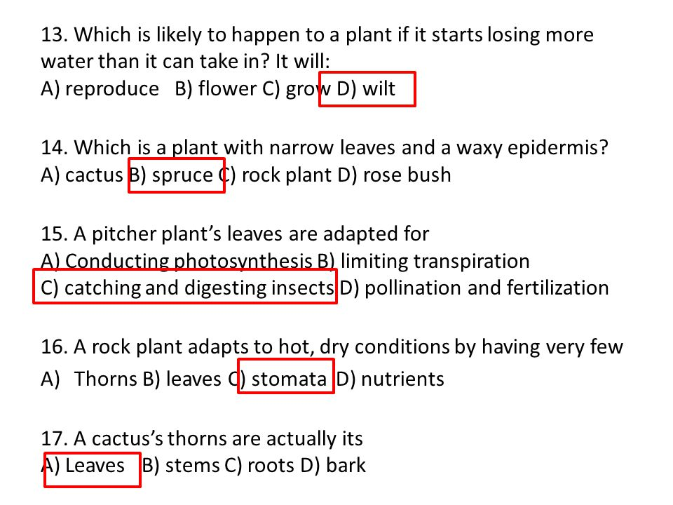 13. Which is likely to happen to a plant if it starts losing more water than it can take in It will: A) reproduce B) flower C) grow D) wilt