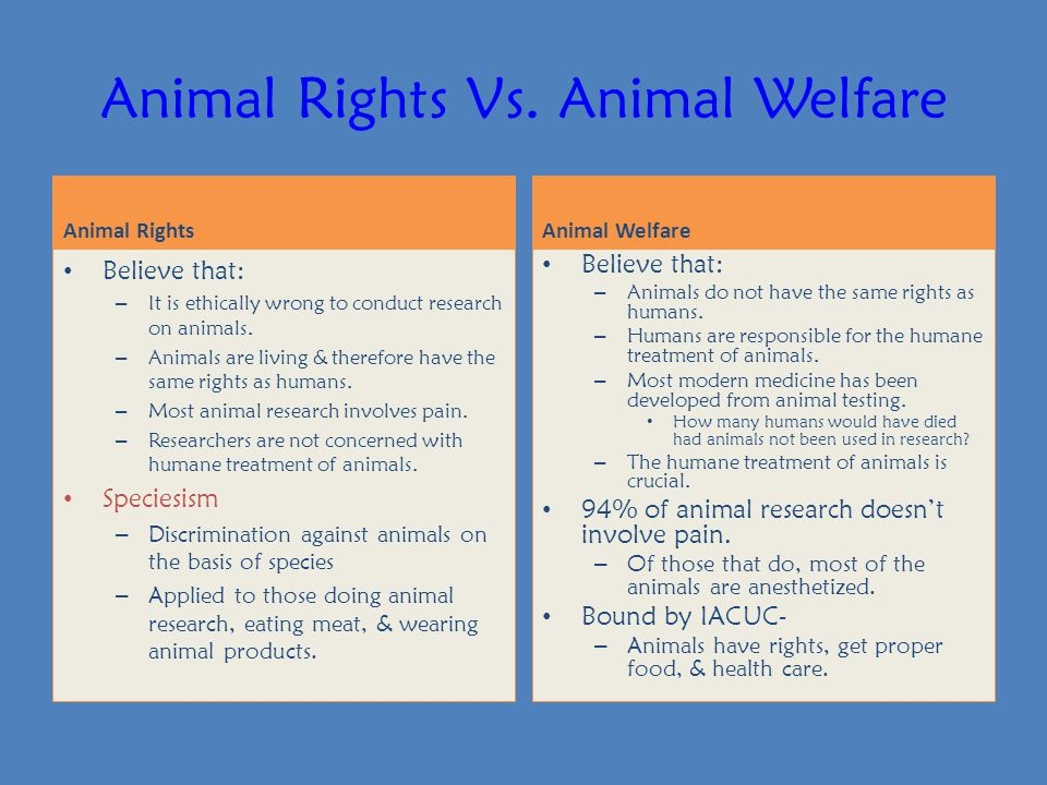 animal rights versus animal welfare Animal rights activists in india have been at the forefront of a legal campaign   nadu state government act was challenged by the animal welfare board of  india.