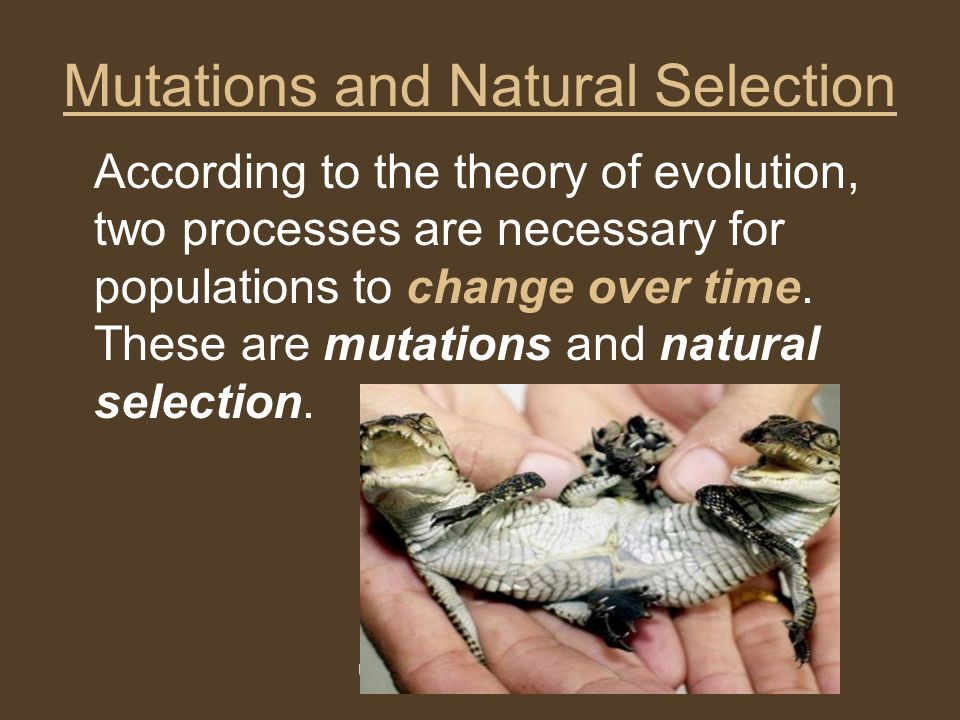 """natural selection evolution mutation variation heritability Darwin's theory of evolution by natural selection provided the first, and only, causal-mechanistic account of the existence of adaptations in nature as such, it provided the first, and only, scientific alternative to the """"argument from design"""" that alone would account for its philosophical significance."""