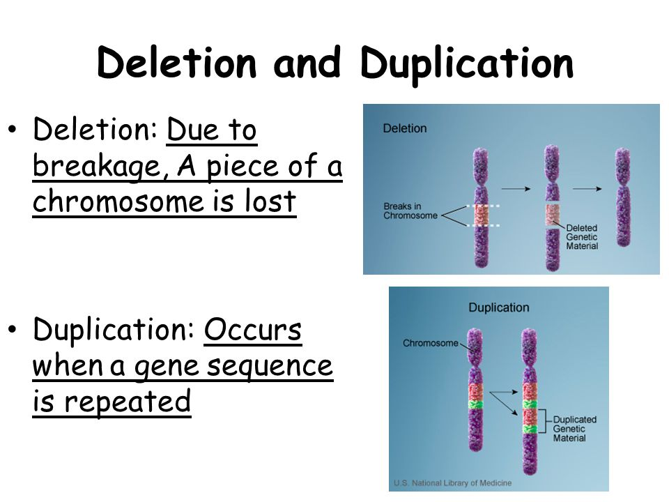Deletion and Duplication