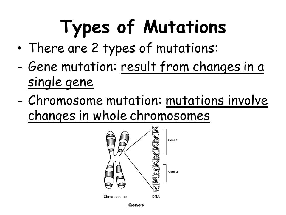 Types of Mutations There are 2 types of mutations:
