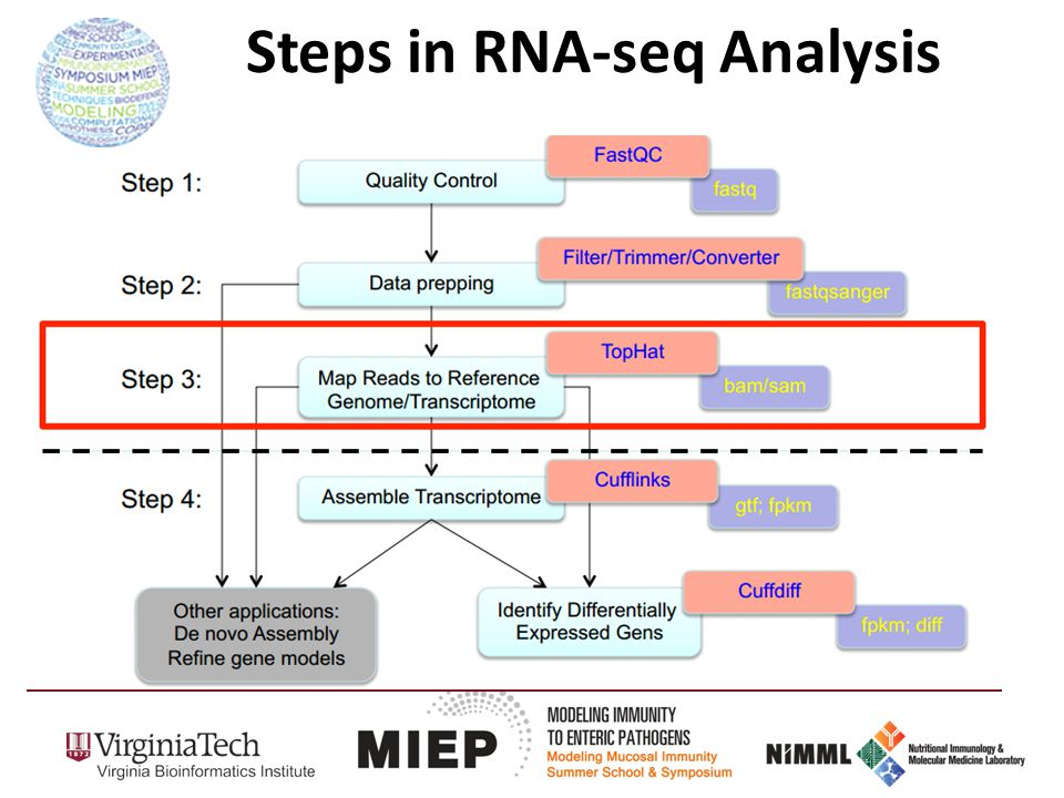 Steps in RNA-seq Analysis