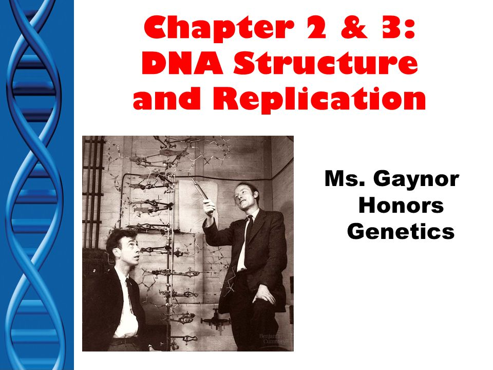 chapter 12 dna structure and replication Com origins of replication chapter 29: dna structure, replication, dna  structure, replication, and repair chapter 12 from campbell essential biology  with.