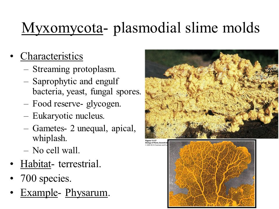 cellulose is an example of a steroid