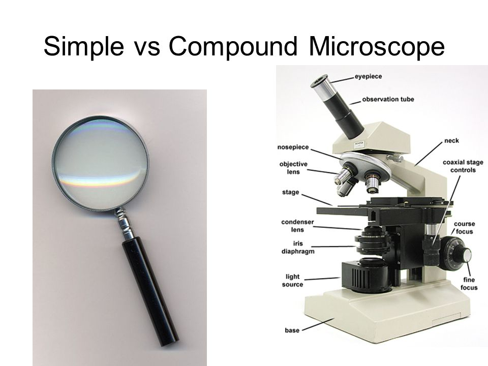 how to use a microscope simple