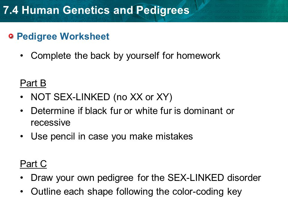 7.4 Human Genetics and Pedigrees - ppt video online download