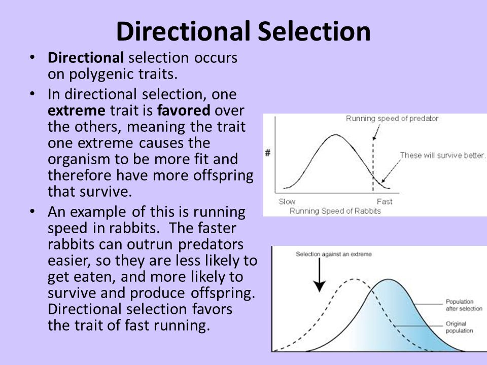 Patterns Of Natural Selection Ppt