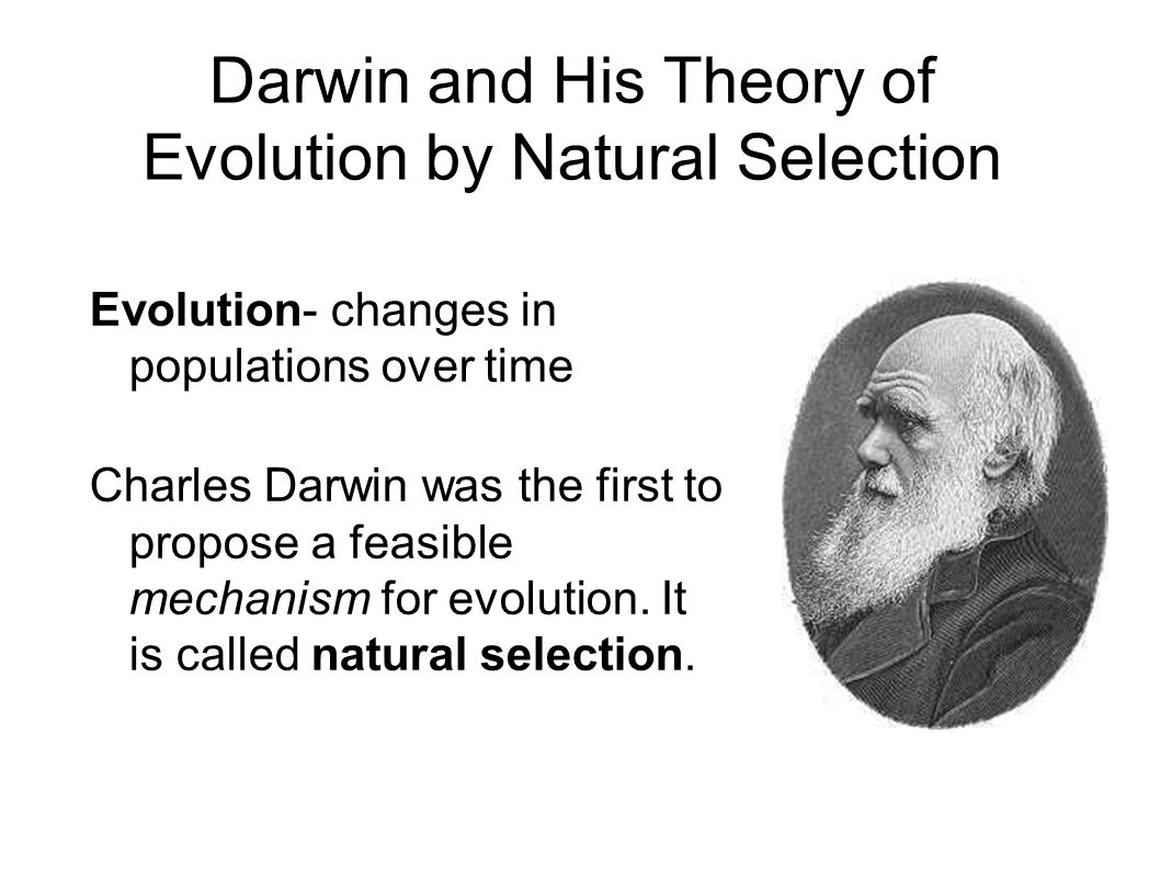 What was darwin's theory of natural selection essay