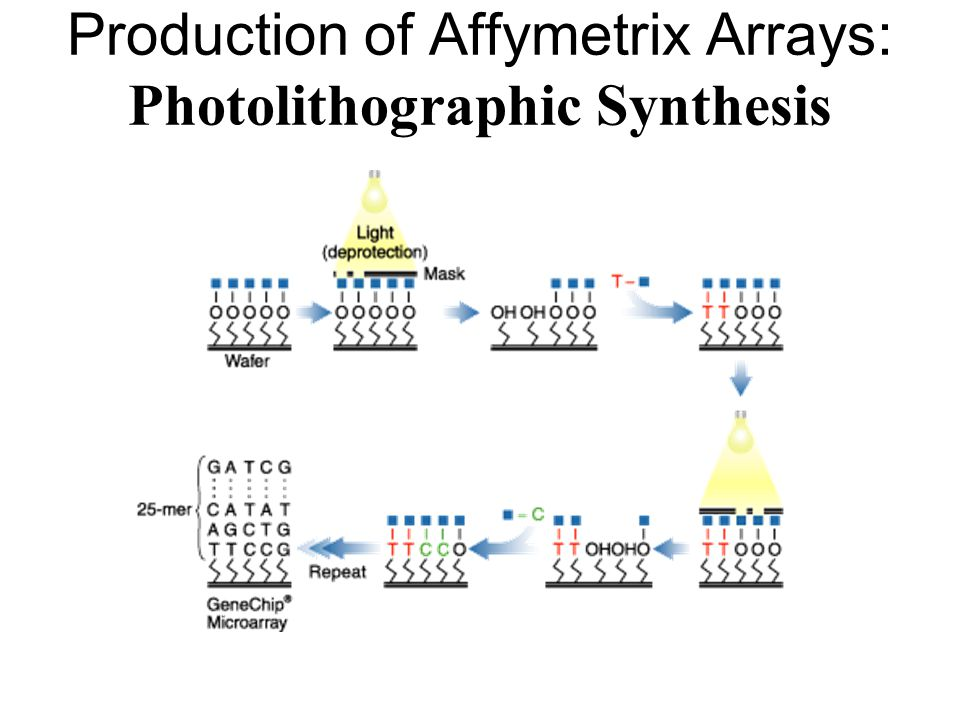 Production of Affymetrix Arrays: Photolithographic Synthesis