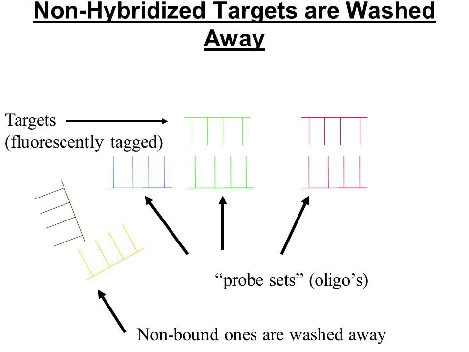 Non-Hybridized Targets are Washed Away