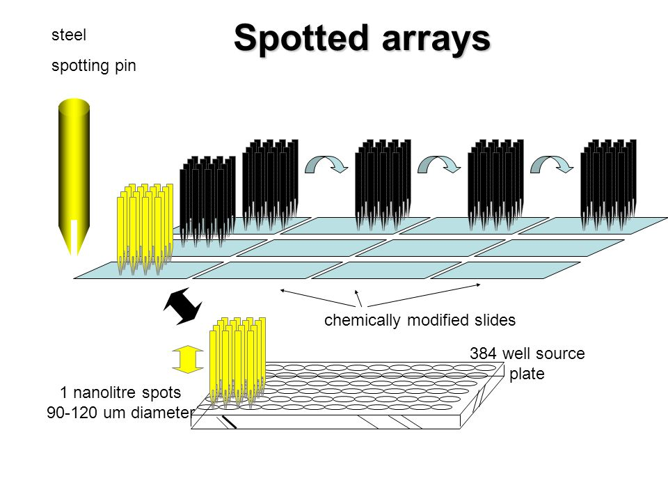 Spotted arrays steel spotting pin chemically modified slides