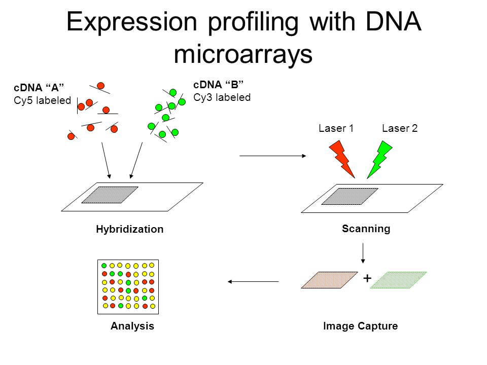 Expression profiling with DNA microarrays