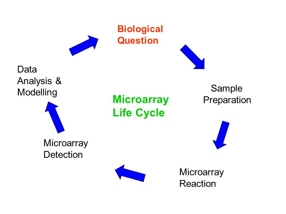Microarray Life Cycle Biological Question Data Analysis & Modelling