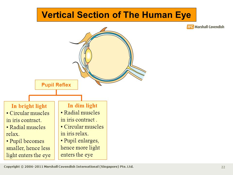 how to make eye muscles relax