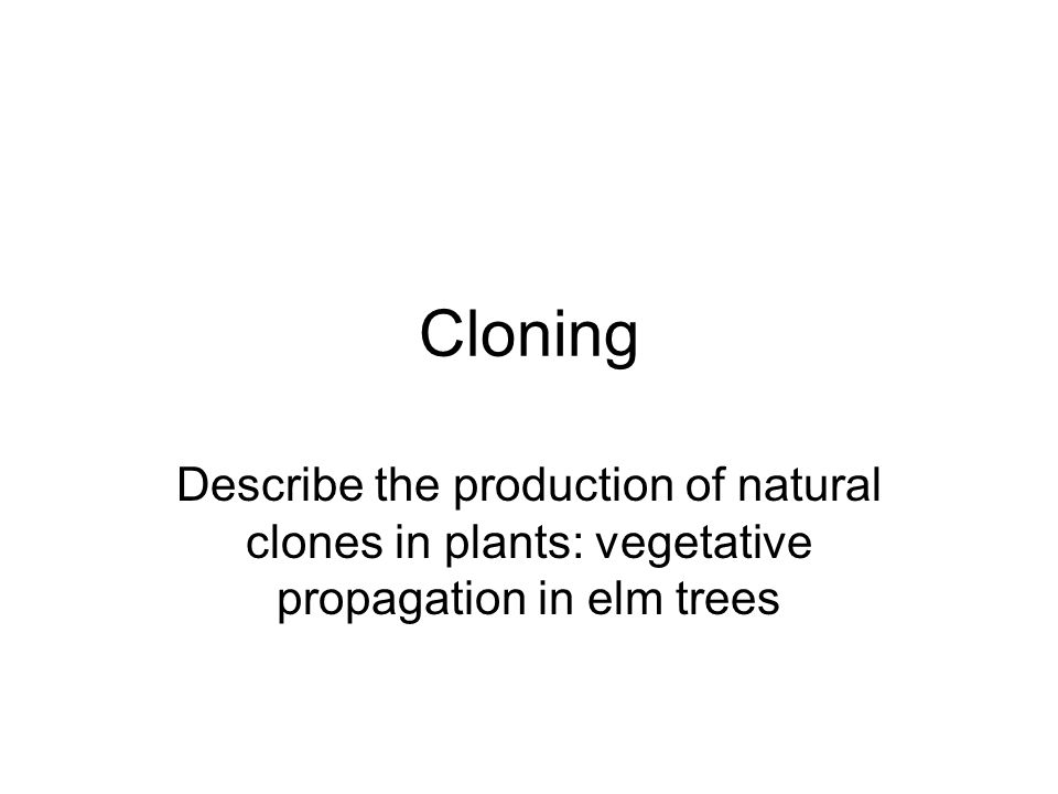 Asexual propagation disadvantages of cloning
