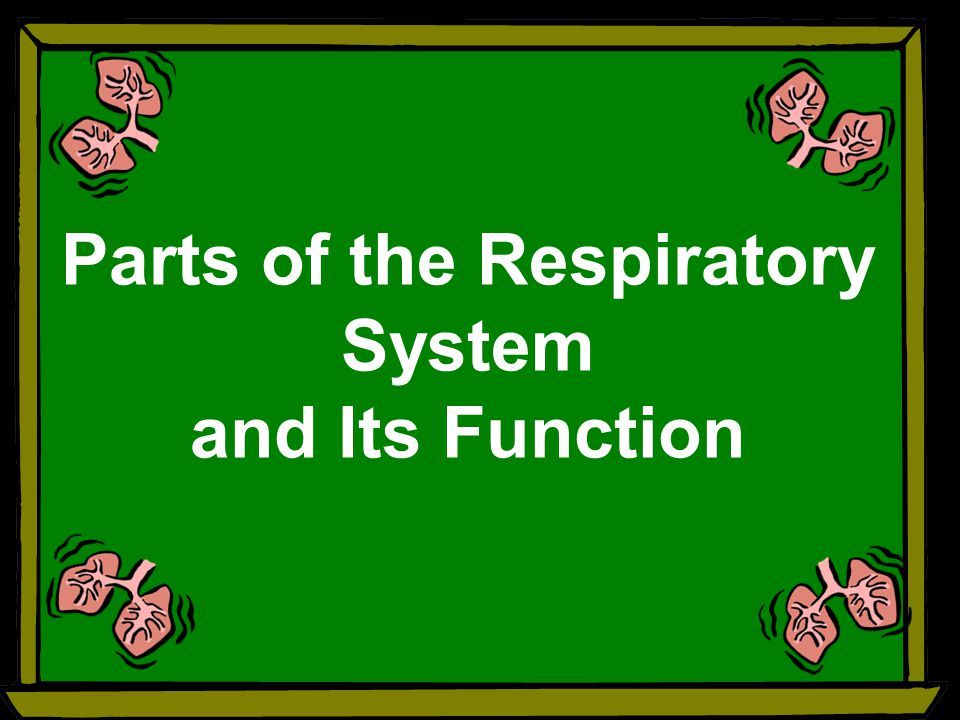 Parts Of The Respiratory System And Its Function Ppt Video Online