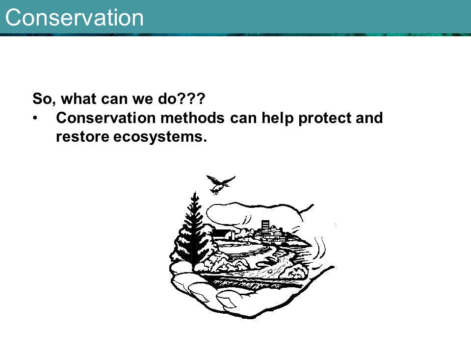 Conservation So, what can we do