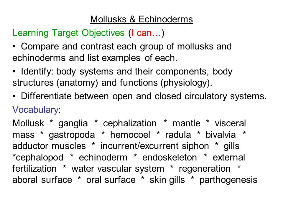 Mollusks echinoderms ppt video online download mollusks echinoderms ccuart Image collections
