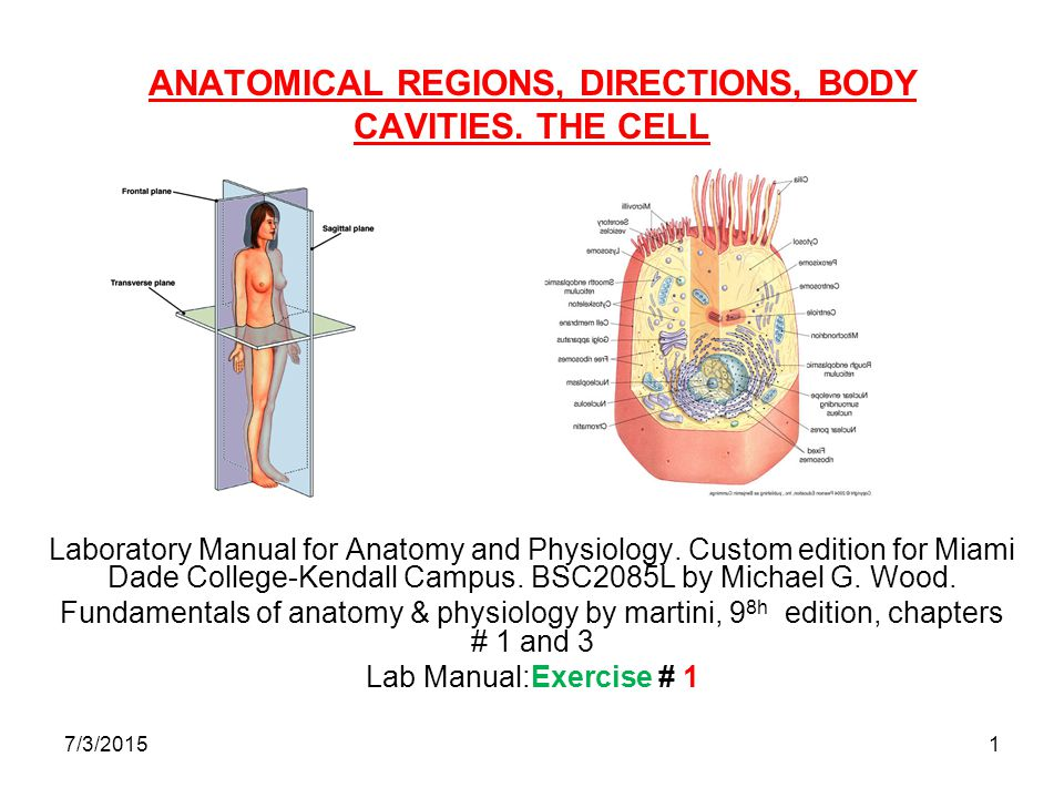 ANATOMICAL REGIONS, DIRECTIONS, BODY CAVITIES. THE CELL - ppt video ...