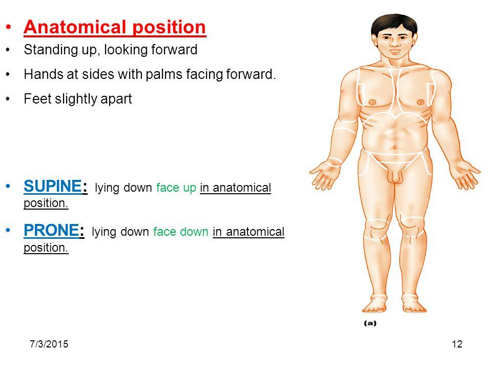 Human Anatomy Positions Choice Image Human Anatomy Organs Diagram