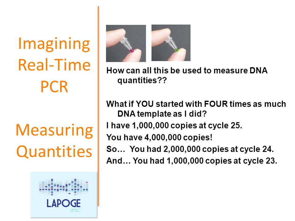 how much template dna for pcr - pcr quantitativo ppt video online download
