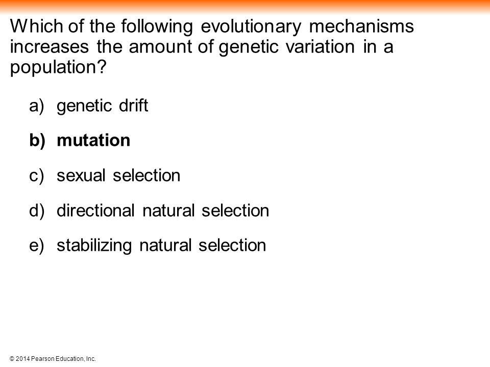 Which of the following evolutionary mechanisms increases the amount of genetic variation in a population