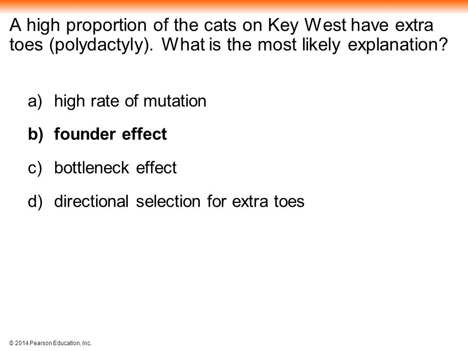 A high proportion of the cats on Key West have extra toes (polydactyly). What is the most likely explanation