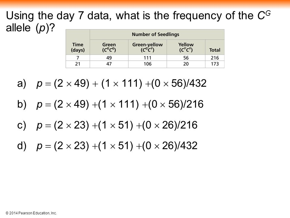 Using the day 7 data, what is the frequency of the CG allele (p)