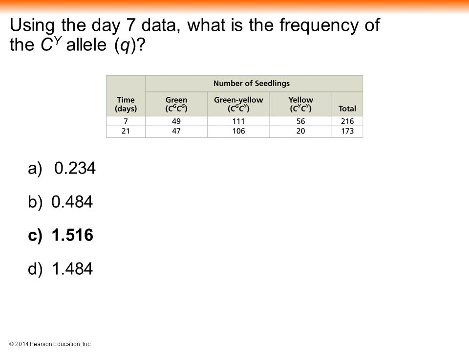 Using the day 7 data, what is the frequency of the CY allele (q)