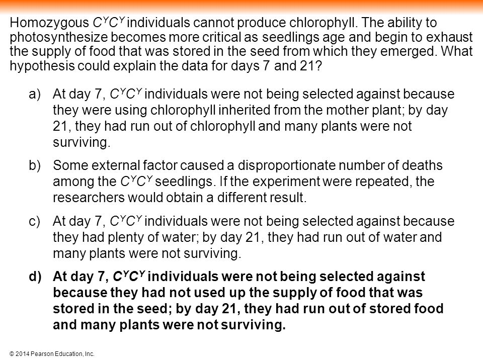 Homozygous CYCY individuals cannot produce chlorophyll