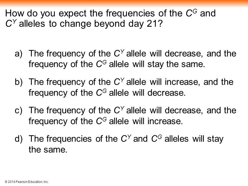 How do you expect the frequencies of the CG and CY alleles to change beyond day 21