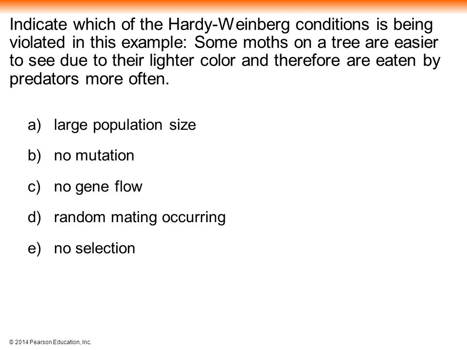 Indicate which of the Hardy-Weinberg conditions is being violated in this example: Some moths on a tree are easier to see due to their lighter color and therefore are eaten by predators more often.