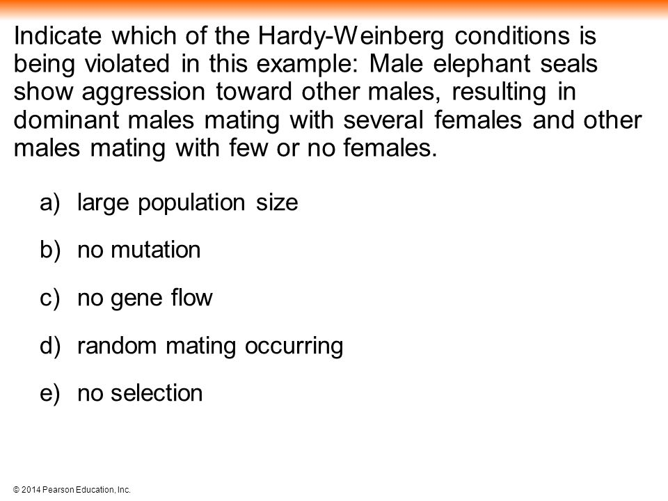 Indicate which of the Hardy-Weinberg conditions is being violated in this example: Male elephant seals show aggression toward other males, resulting in dominant males mating with several females and other males mating with few or no females.