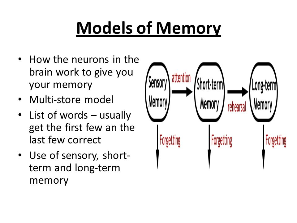 Short Term And Long Term Memory : B brain and mind ppt video online download