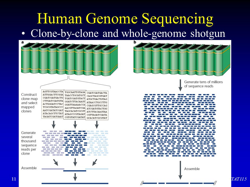 Human Genome Sequencing