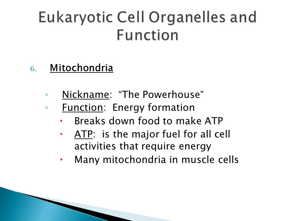 facts and functions of eukaryotic organelles What are structure and function of the and then the cell dies because organelles functions are what is the function of membranous organelles of a eukaryotic.