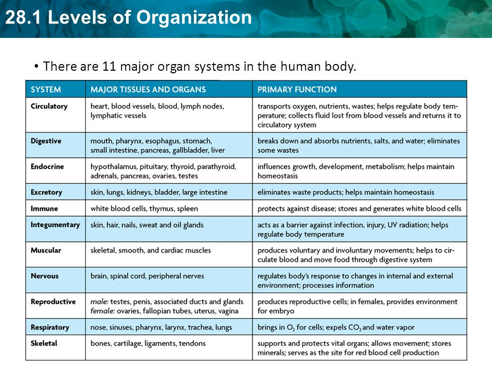 There are 11 major organ systems in the human body.
