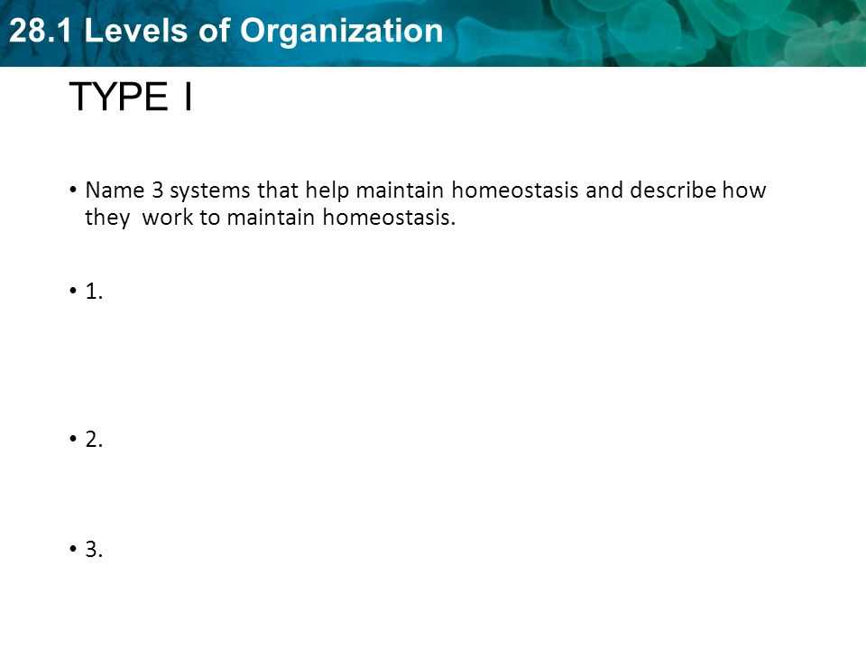 TYPE I Name 3 systems that help maintain homeostasis and describe how they work to maintain homeostasis.