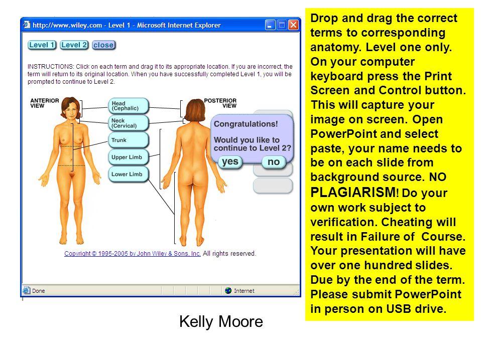 Beste Level 2 Anatomy And Physiology Mock Exam Fotos - Menschliche ...