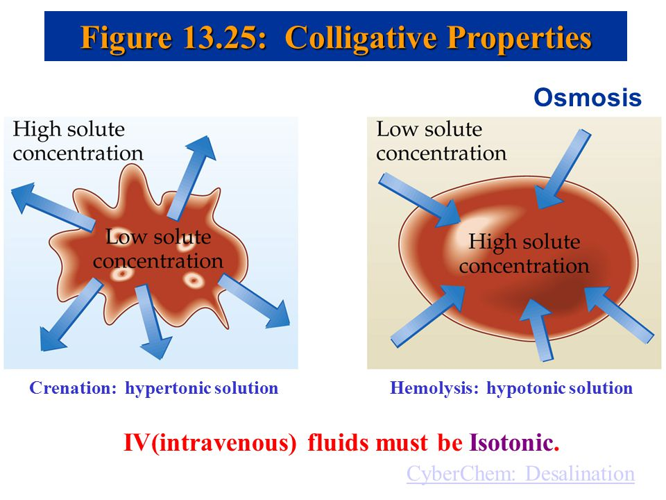 determining isotonic solution sheep erythrocytes isotonic If an animal cell such as red blood cell is placed into a isotonic solution, amount of water molecules is transported into the red blood cells by osmosis is equal to the amount of water molecules transported out from the cell (as shown in the diagram above.
