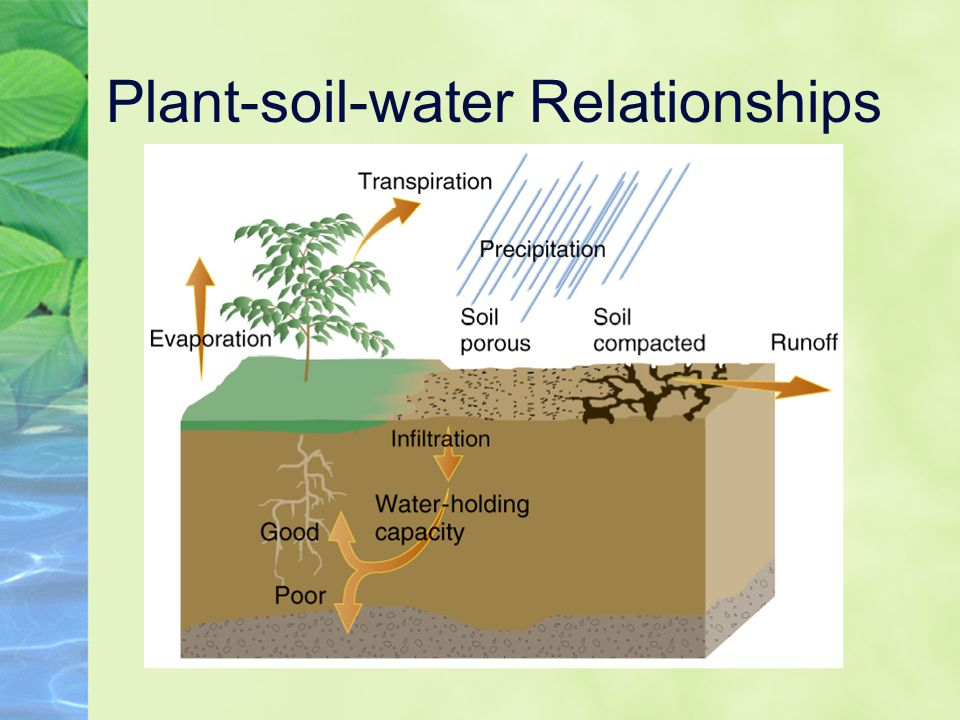 soil plant and animal relationship