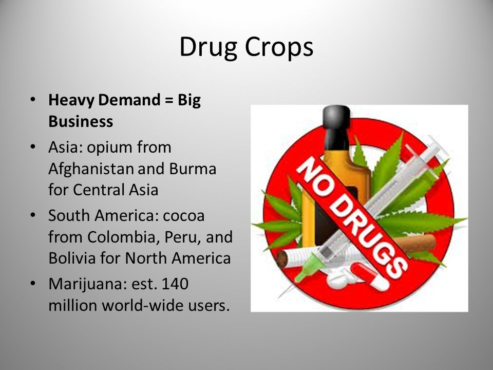 Drug Crops Heavy Demand = Big Business