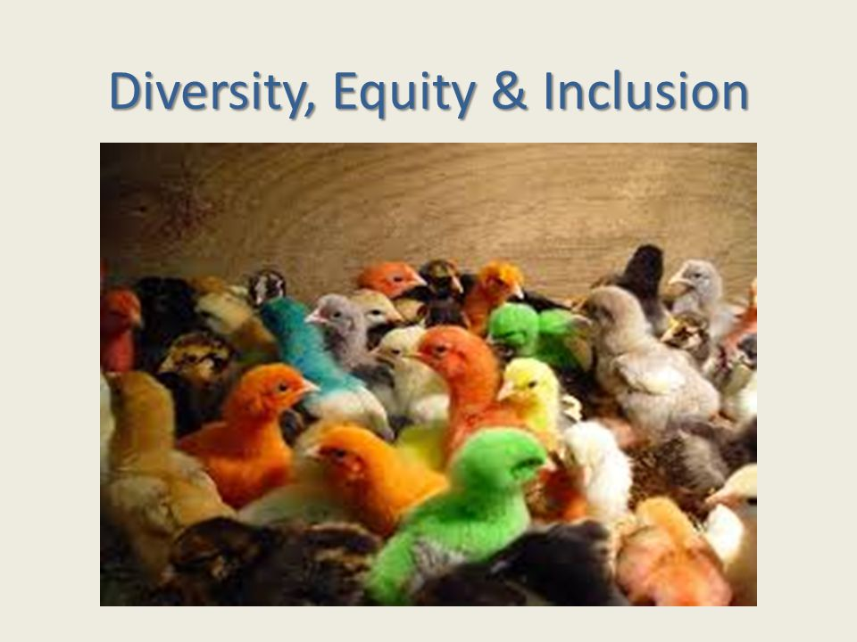 Diversity, Equity & Inclusion