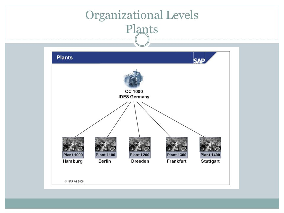 Organizational Levels Plants