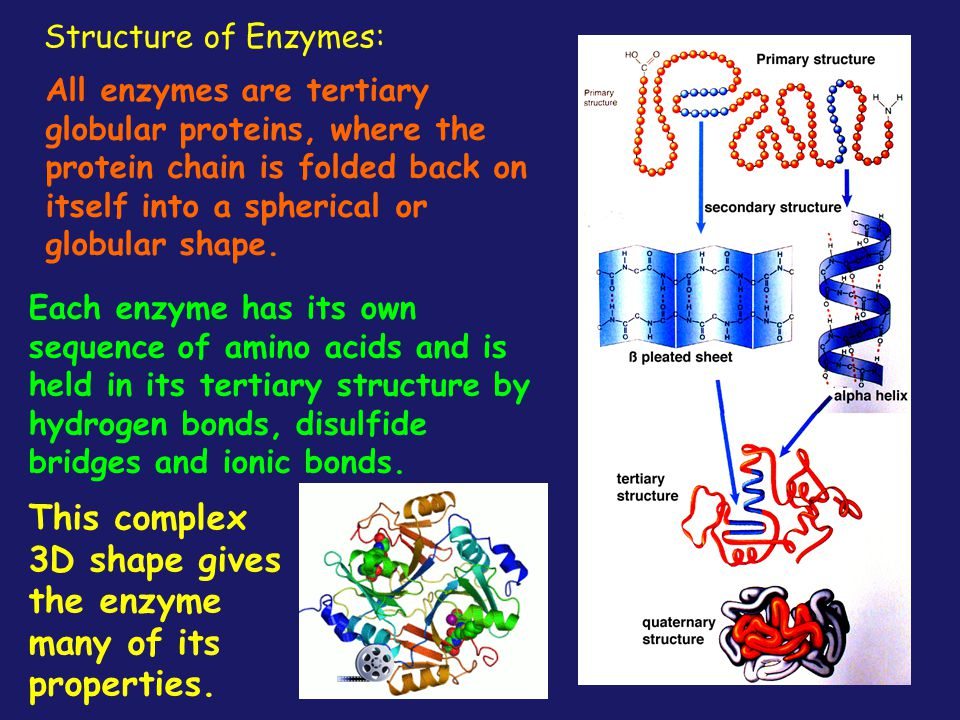 This complex 3D shape gives the enzyme many of its properties.
