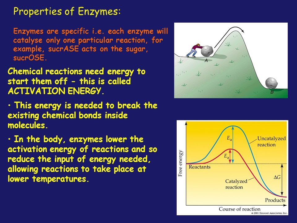 Properties of Enzymes: