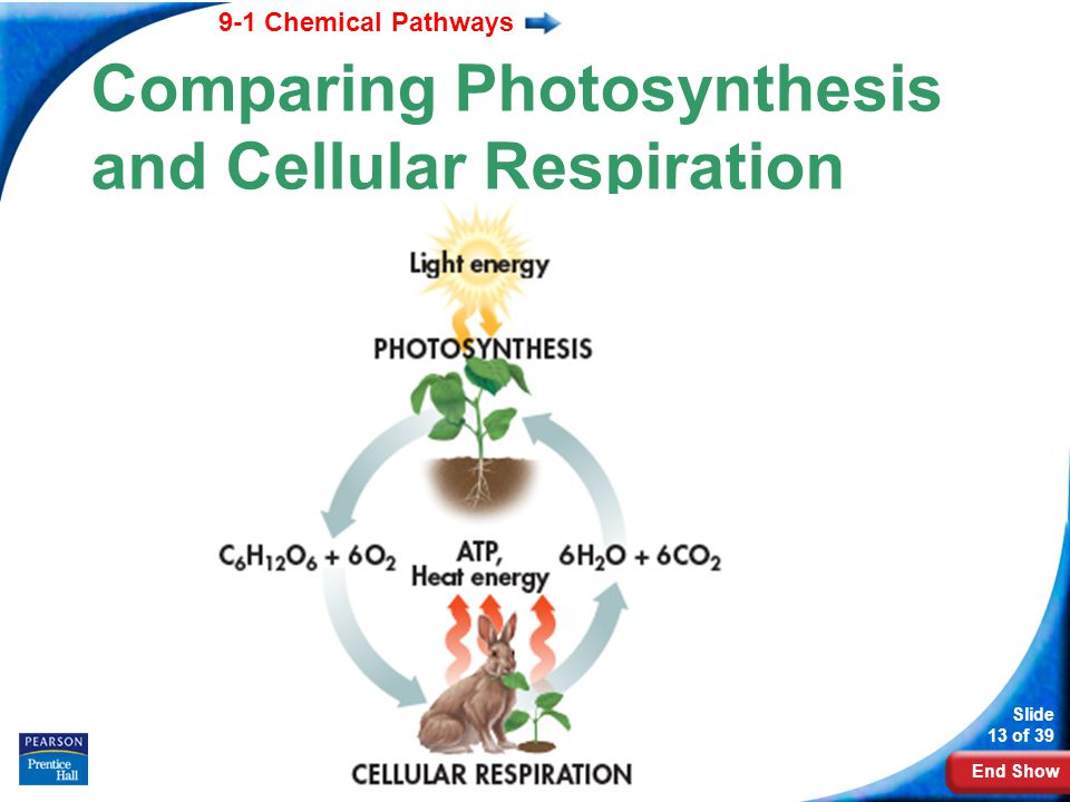 9-1 Cell Respiration: An Overview - ppt download