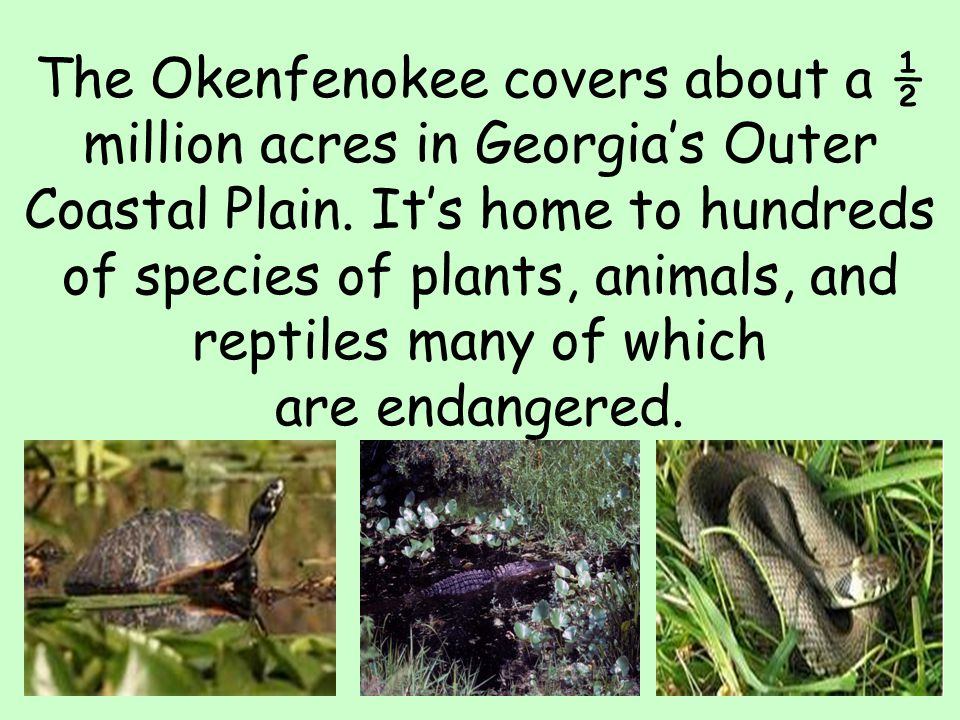 The Okenfenokee covers about a ½ million acres in Georgia's Outer Coastal Plain.