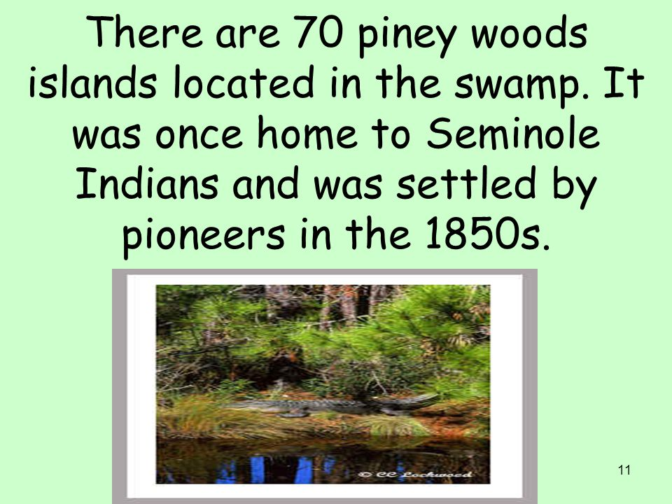 There are 70 piney woods islands located in the swamp